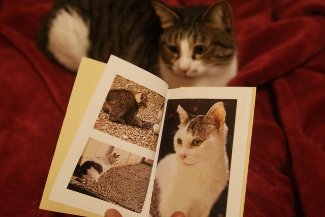 フルカラーの冊子印刷